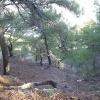 Природа Туапсе 5