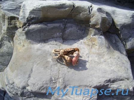 Природа Туапсе 14