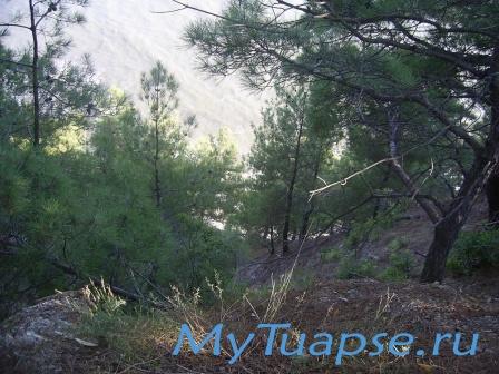 Природа Туапсе 8