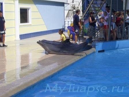 Дельфинарий 3